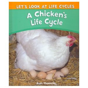 A Chicken's Life Cycle