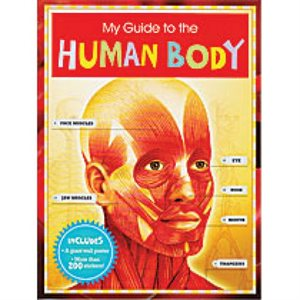 My Guide To The Human Body