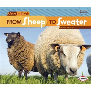 From Sheep To Sweater