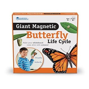 Giant Magnetic Butterfly Life Cycle